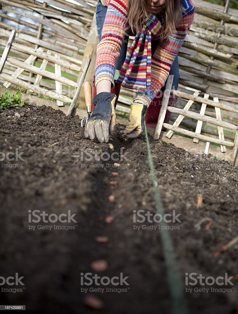 Woman with Stripes Sowing Seeds in Veg Patch royalty-free stock photo