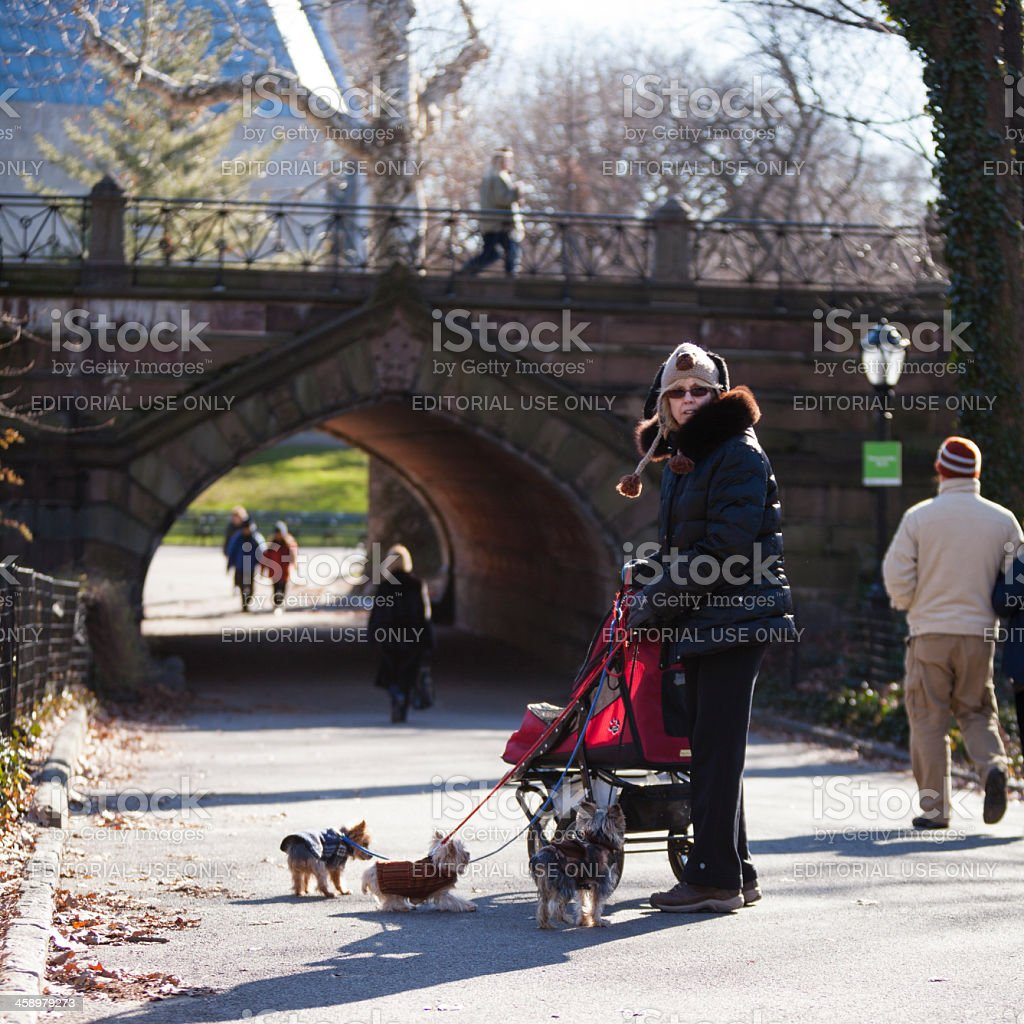 Woman with stroller and dogs in Central Park royalty-free stock photo