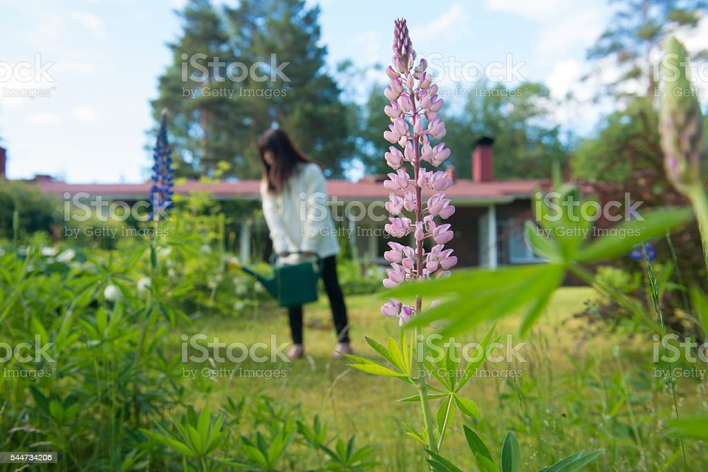 Woman with watering can in garden. stock photo