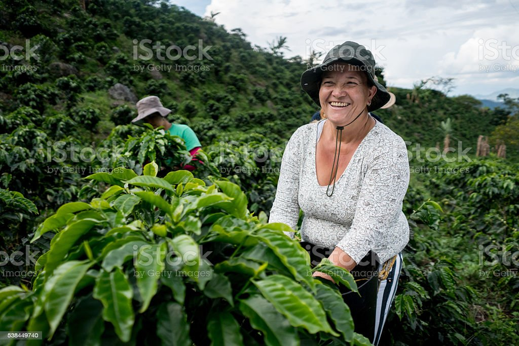 Woman working at Colombian coffee farm stock photo