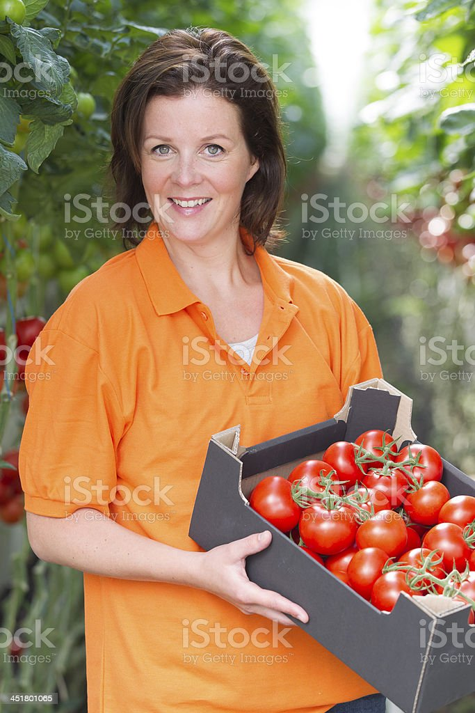 Woman working in a glasshouse, showing organic tomato royalty-free stock photo