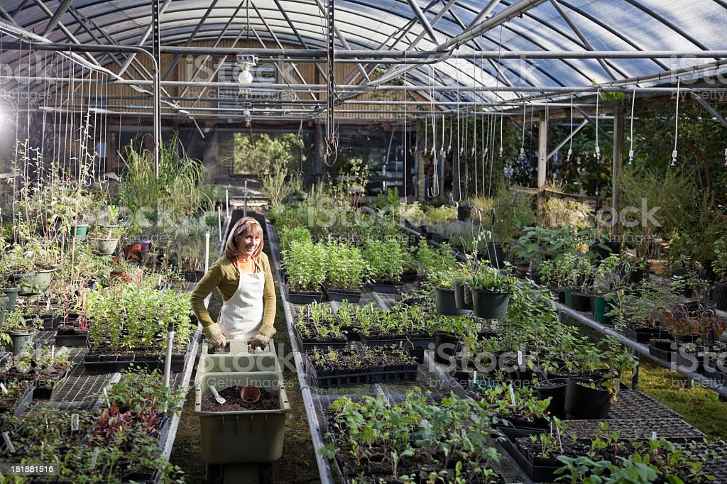 Woman working in garden center royalty-free stock photo