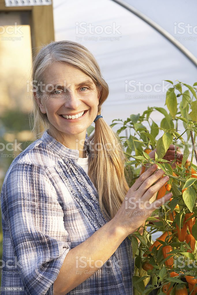 Woman working in greenhouse royalty-free stock photo