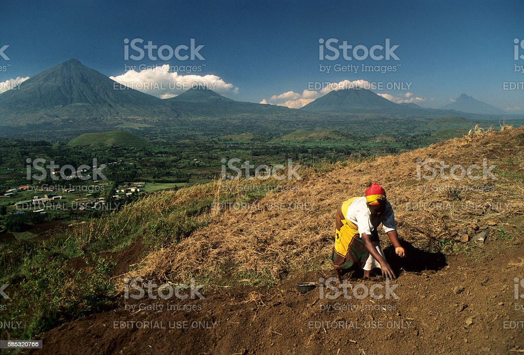 Woman working in the field, Virungas volcanoes in background, Uganda stock photo