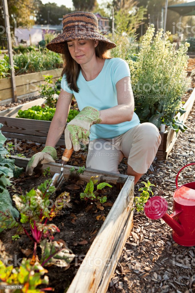 Woman working in vegetable garden royalty-free stock photo
