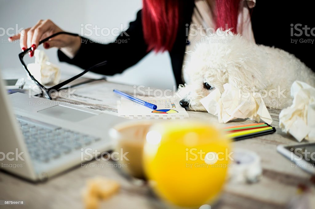 Woman working on computer with dog looking at the screen stock photo