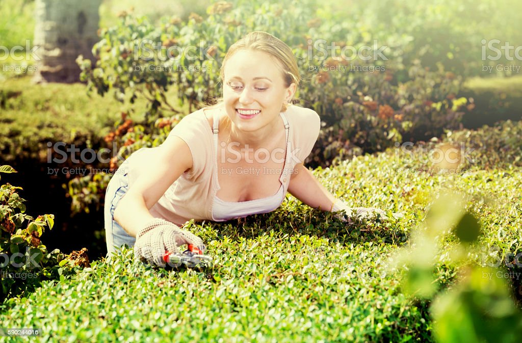 Woman working with green bush using horticultural tools stock photo