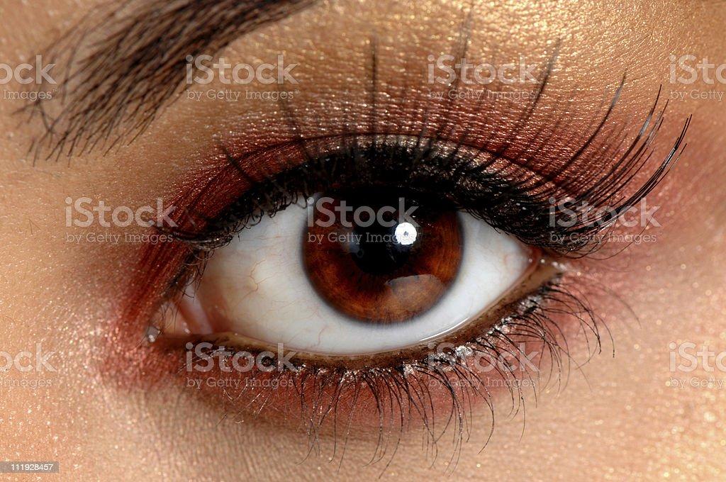 Woman's Brown Eye with Long False Eyelashes royalty-free stock photo
