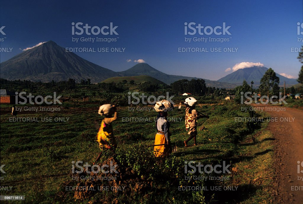 Womans carrying loads in Kisoro, Virungas volcanoes in distance, stock photo