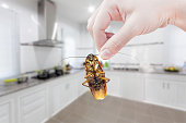 Woman's Hand holding cockroach on kitchen background