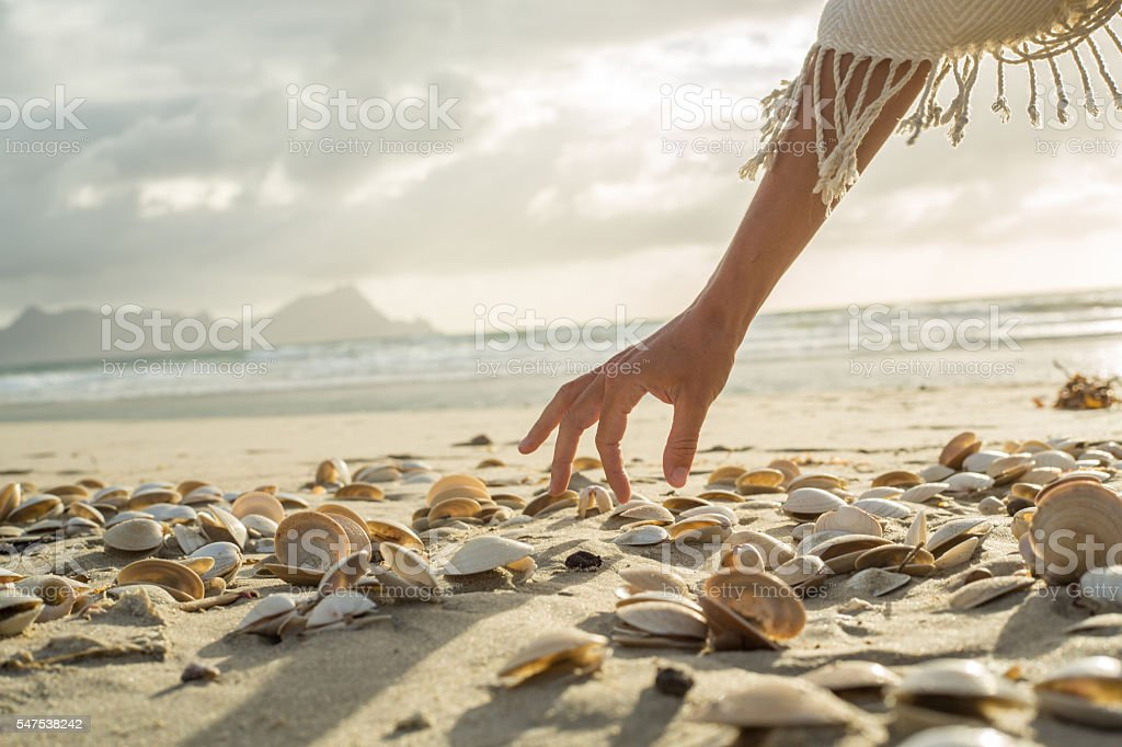 Woman's hand picking up seashells from beach at sunset stock photo