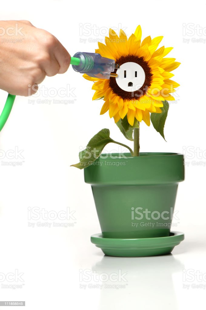 Woman's Hand Pluging Electrical Plug into Sunflower on white royalty-free stock photo