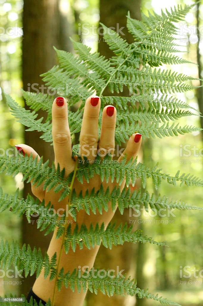 Woman´s hand touching green leaf stock photo