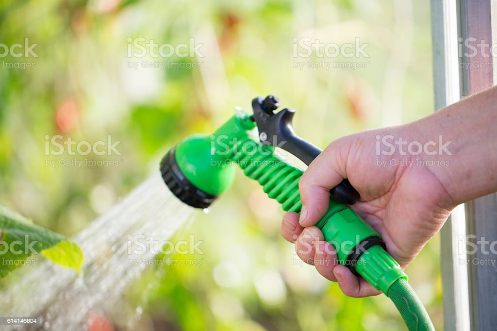 Woman's hand with hose sprinkle watering plants in the garden stock photo