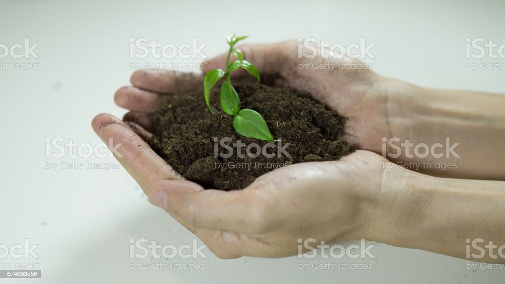 woman's hands holding a plant growing out of the ground.Green seedling growing from soil,Ecology concept., World Environment Day, Earth Day, World food day concept.Hope, New Life or csr activities stock photo