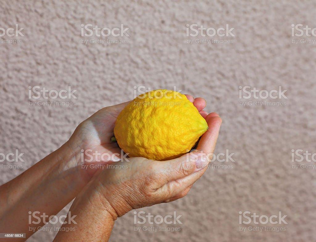 Woman's hands holding citrus fruit stock photo