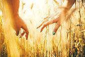 woman's hands in golden wheat field