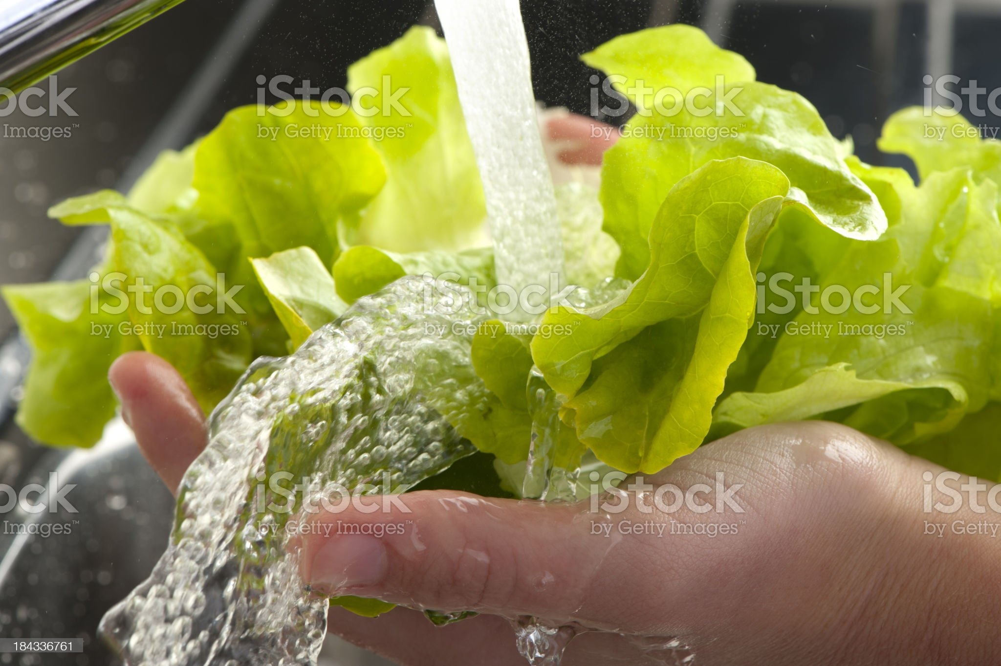 Womans hands washing lettuce leaves royalty-free stock photo
