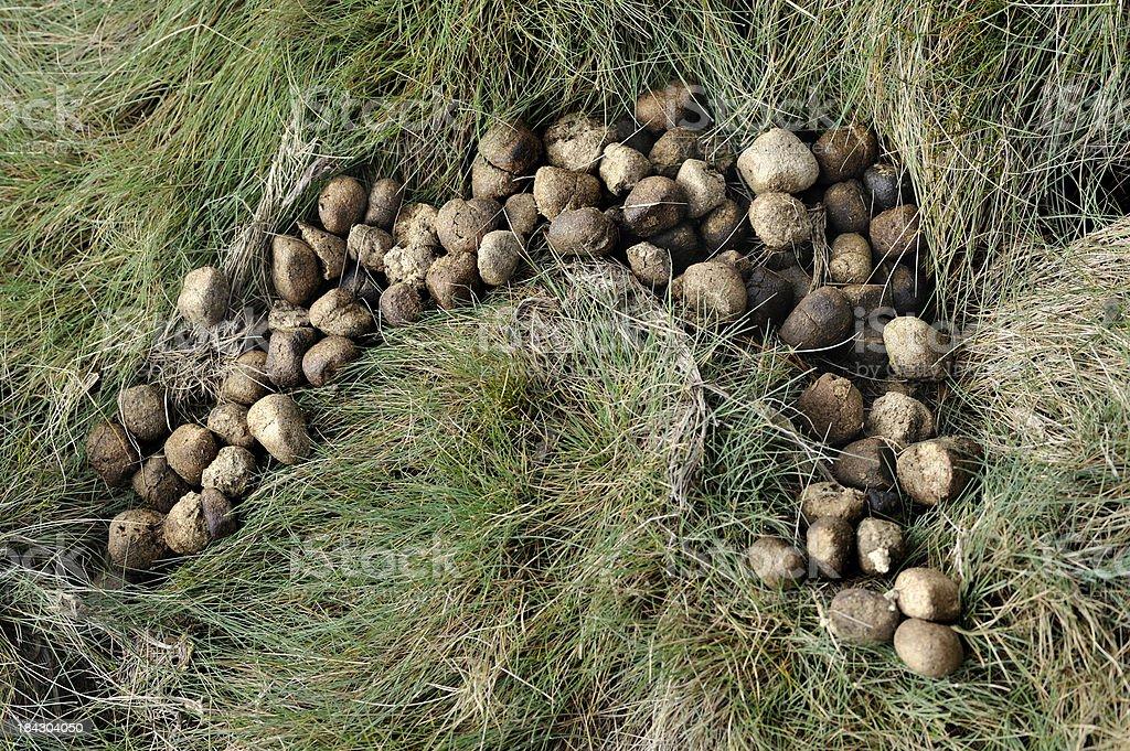 Wombat Dung stock photo