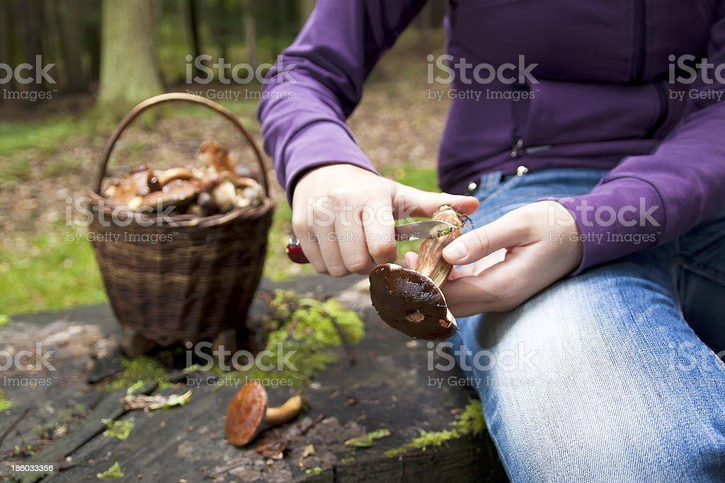 Women cleaning mushroom after Picking, Mushrooming stock photo