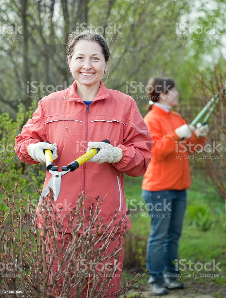 women cutting shrubbery stock photo