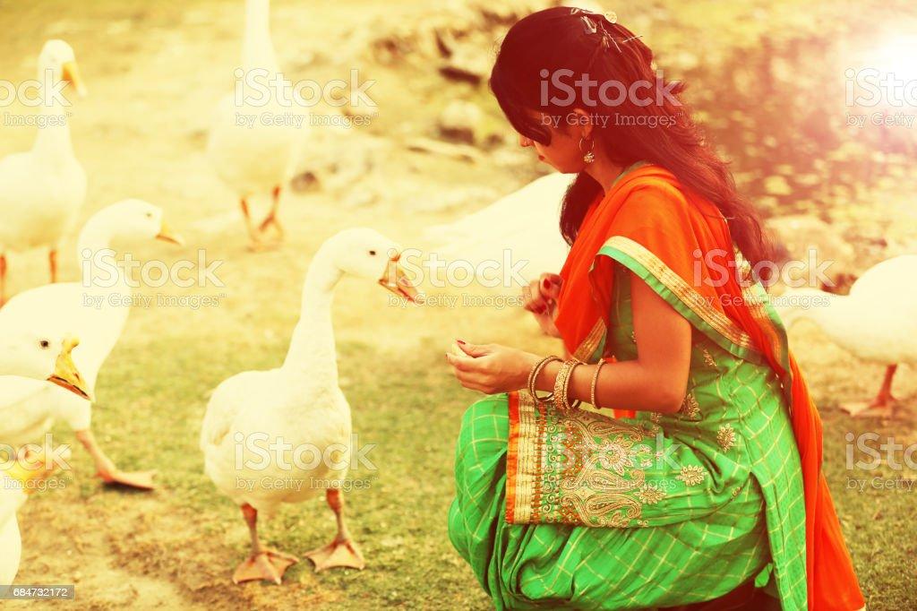 Women feeding to the goose stock photo