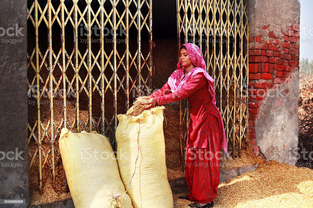 Women filling sack of shaff stock photo