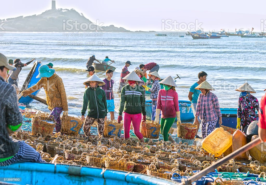 Women groups struggling carry fish to coastline stock photo
