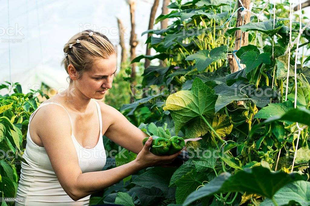 Women harvested vegetables in greenhouse - organic food production stock photo