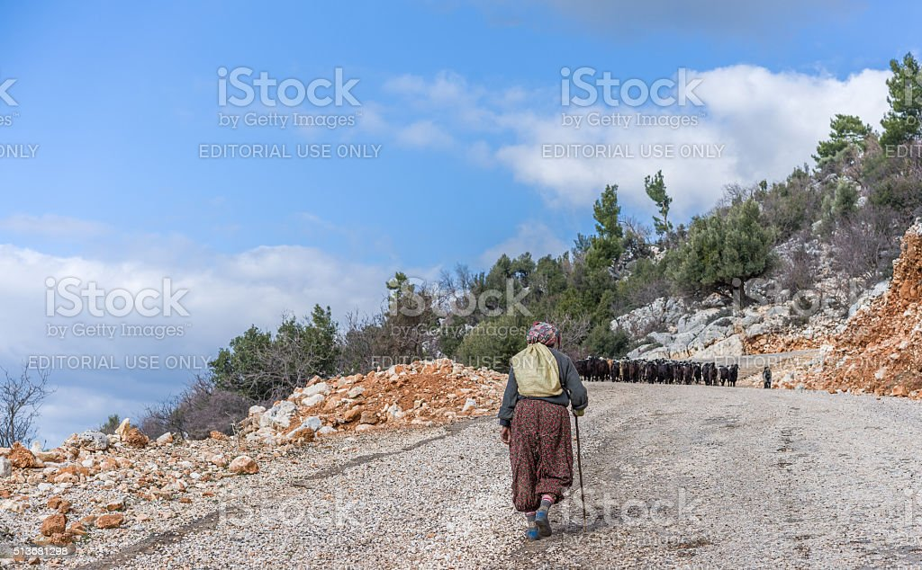 Women herding sheep. stock photo