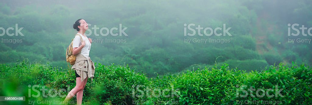 Women looking at tea plantation field. stock photo
