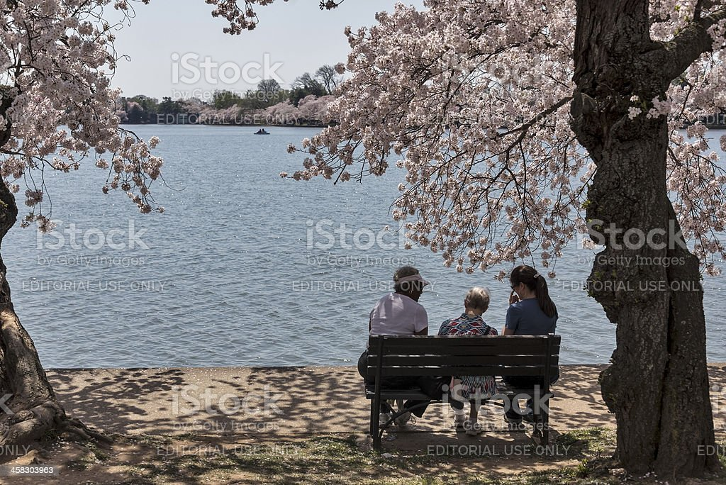 Women on a shady bench under cherry trees in DC royalty-free stock photo