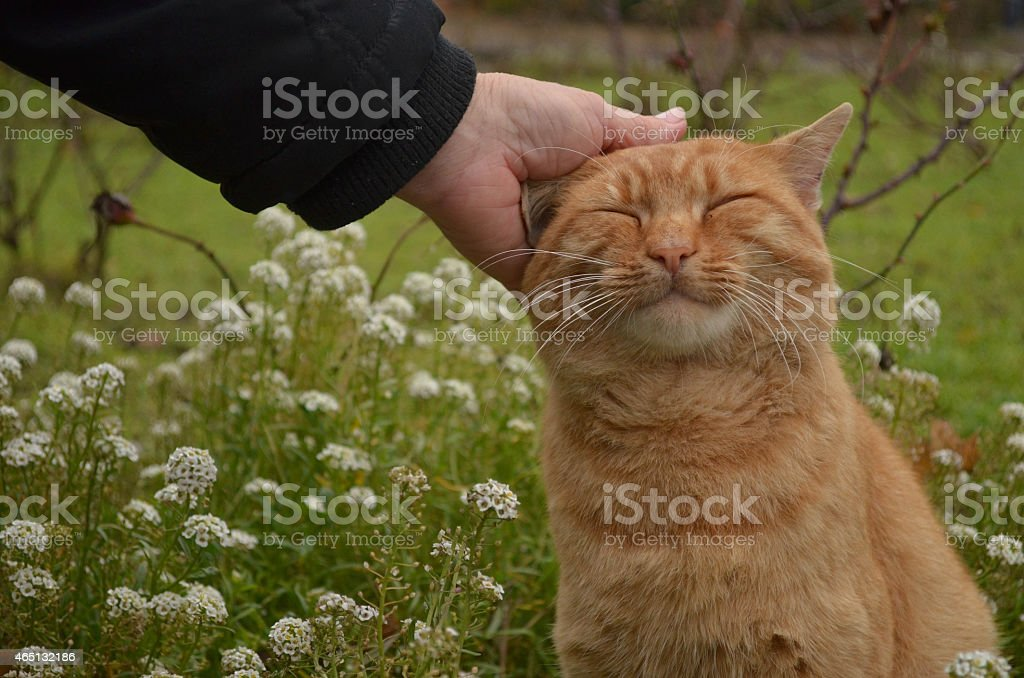 Women pets a cat stock photo