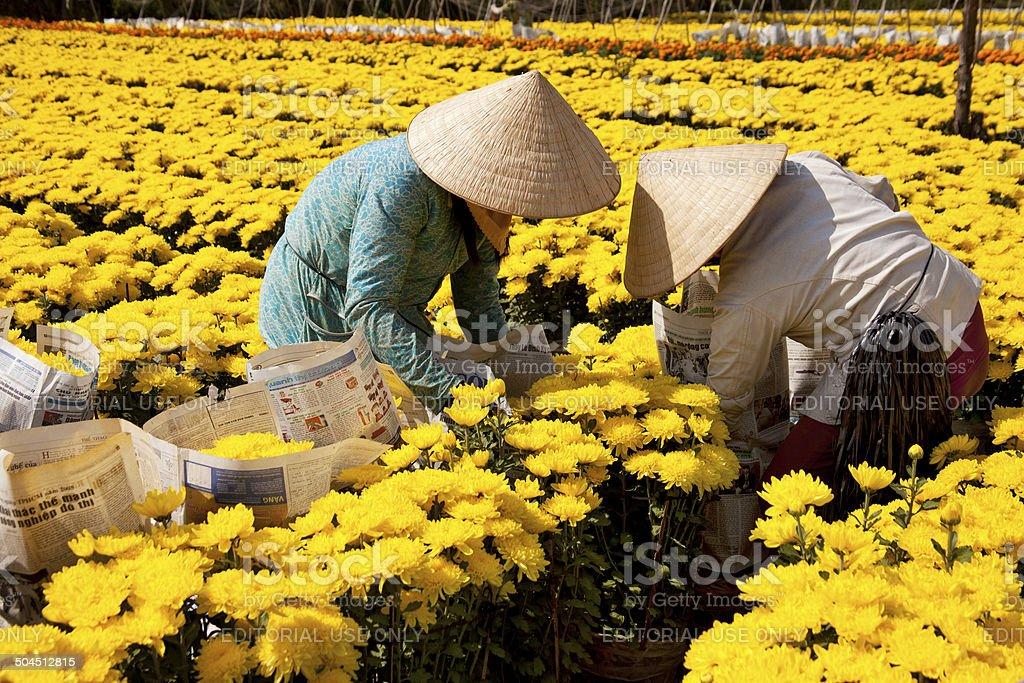 Women Prepare Flowers for Shipment stock photo