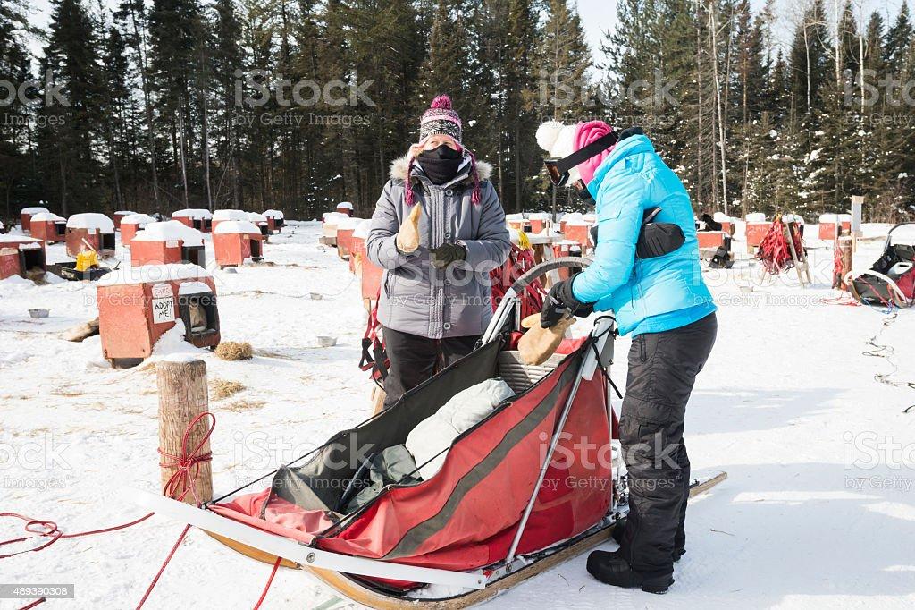 Women putting on winter gloves for dogsledding stock photo