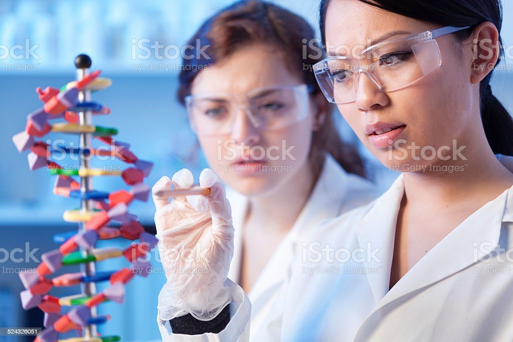 Women Science Students in Research Laboratory Studying DNA Strand Model stock photo