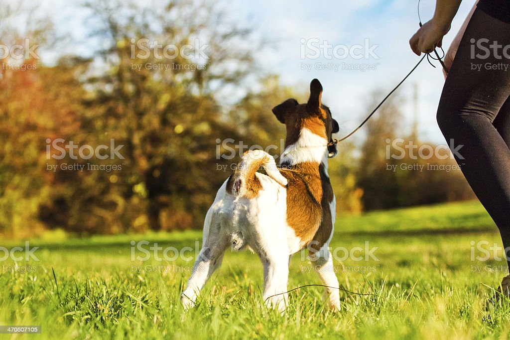 women walking with dog stock photo
