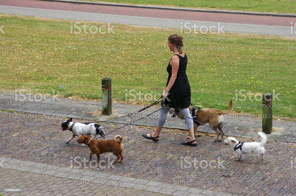 Women walking with here dogs royalty-free stock photo