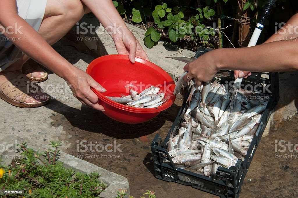 Women wash their hands goatfish stock photo