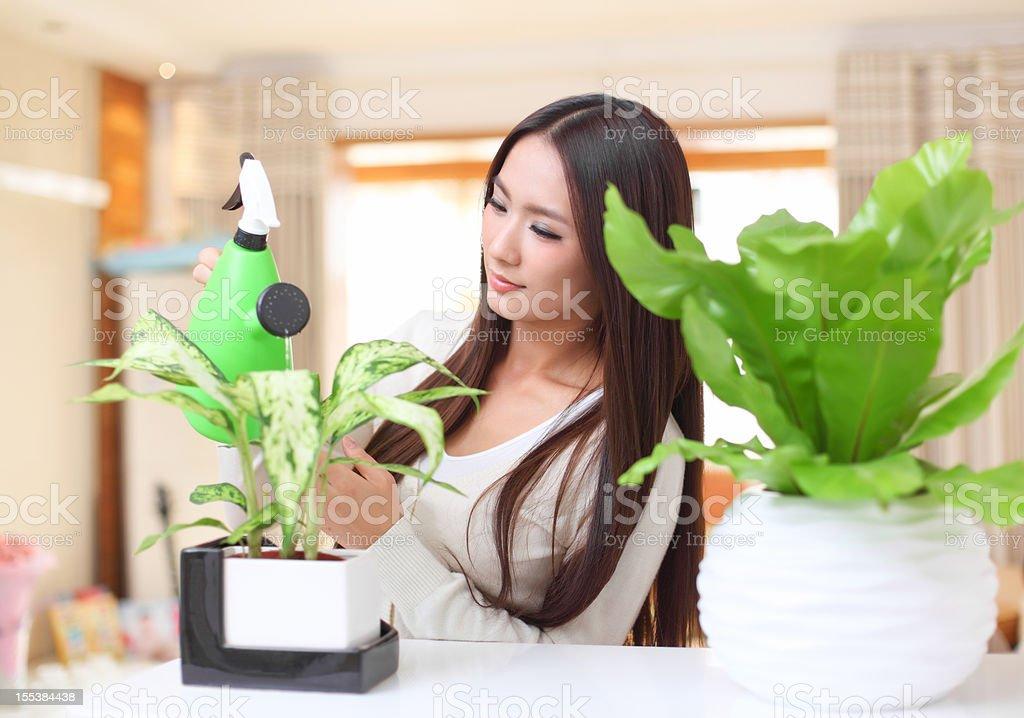 women watering the flowers stock photo