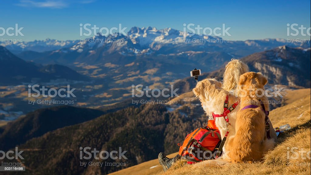 Women with dogs  take Selfie with Selfie Stick in Alps stock photo
