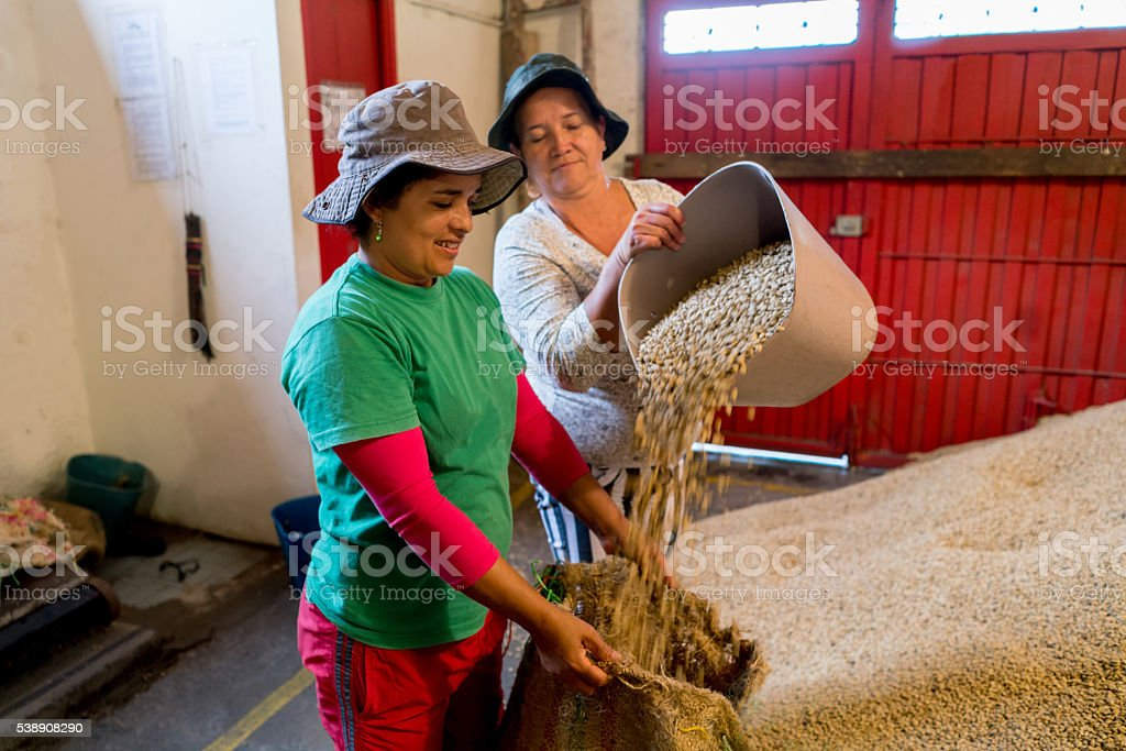 Women working at a Colombian coffee farm stock photo