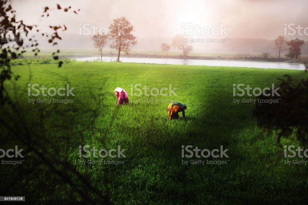 Women working in green field stock photo