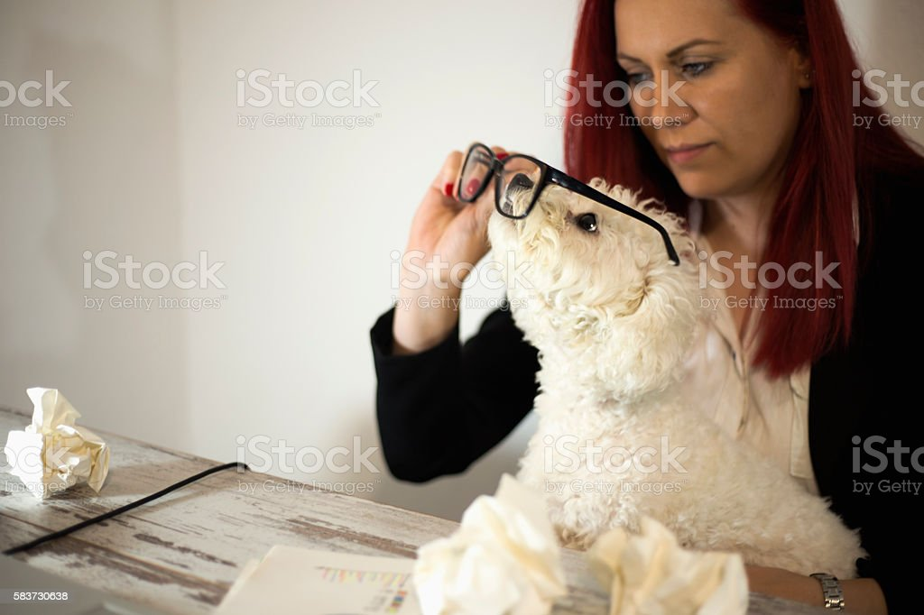 Women working in office and holding dog in her lap stock photo