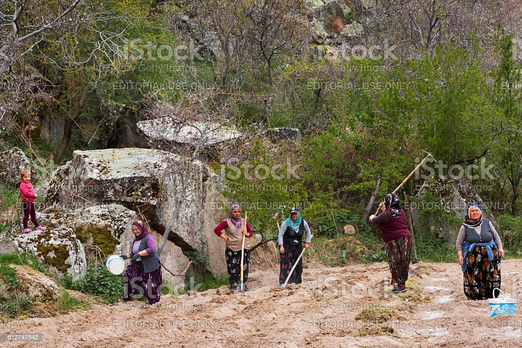 Women working in the farmland. stock photo