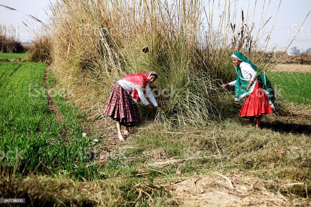 Women working in the field stock photo