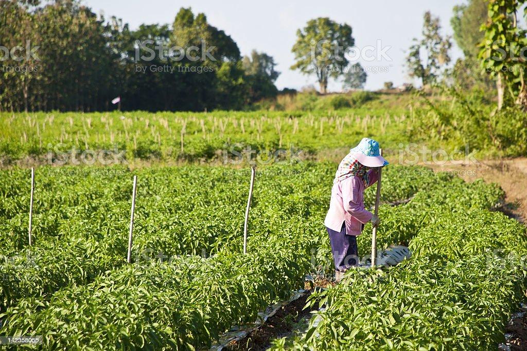 Kobiet pracujących w parku z Zielona papryka zbiór zdjęć royalty-free