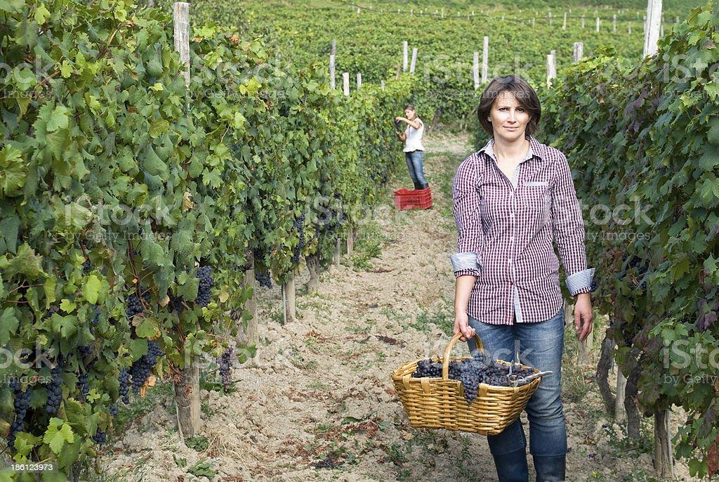 Women working in vineyards stock photo