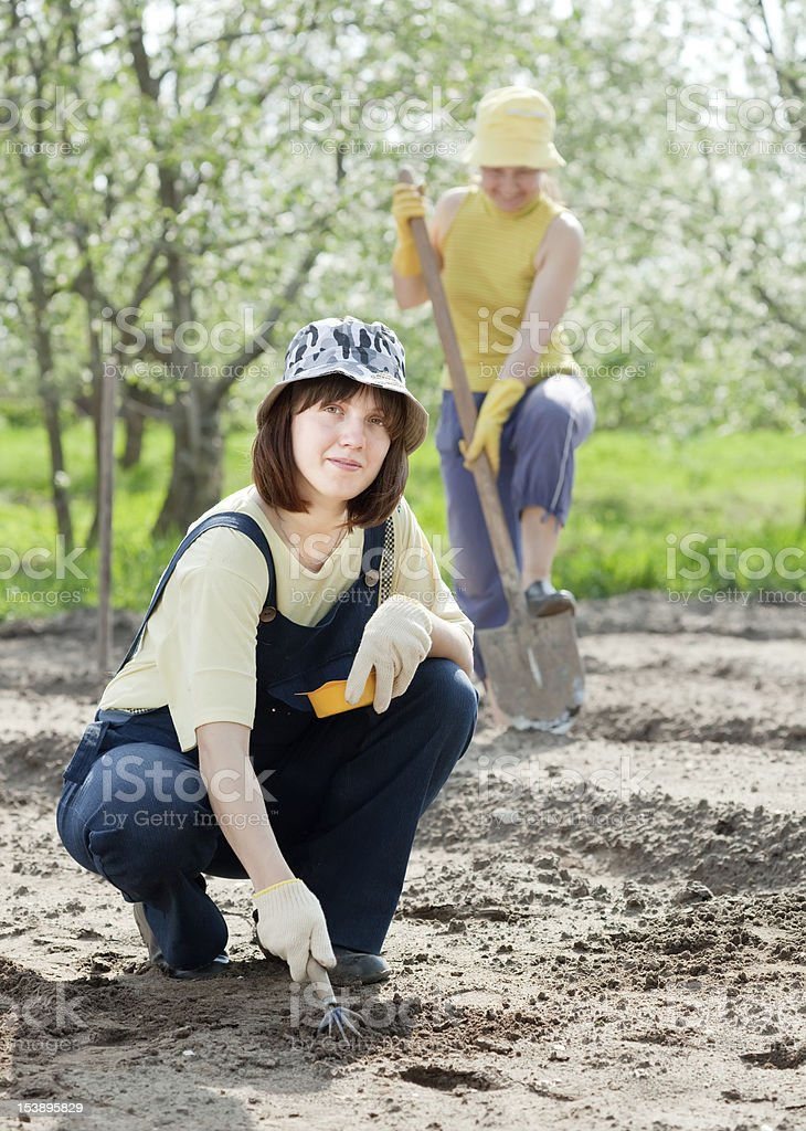 women works at vegetables garden royalty-free stock photo