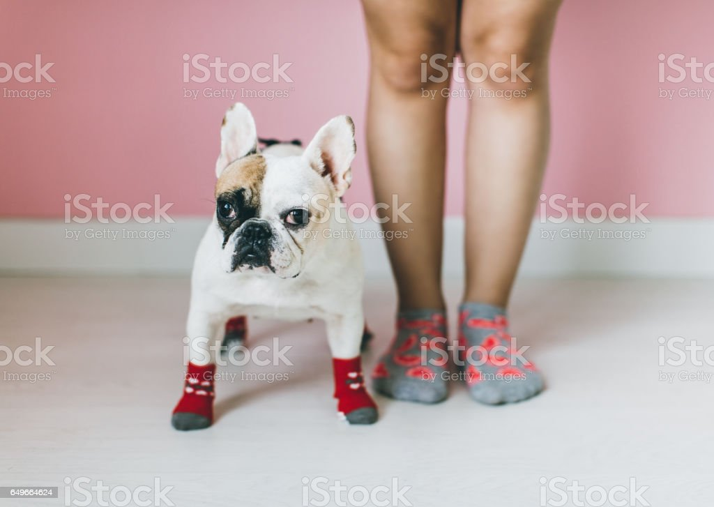Womens Legs with dog side by side. stock photo